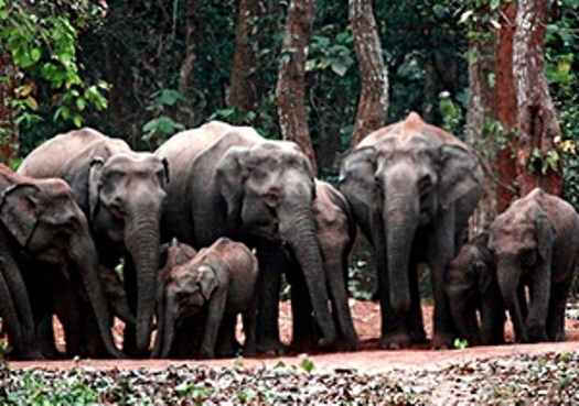 chandaka-elephant-reserve